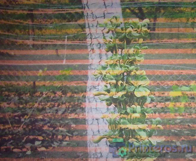 Пример печати струйного принтера полосами