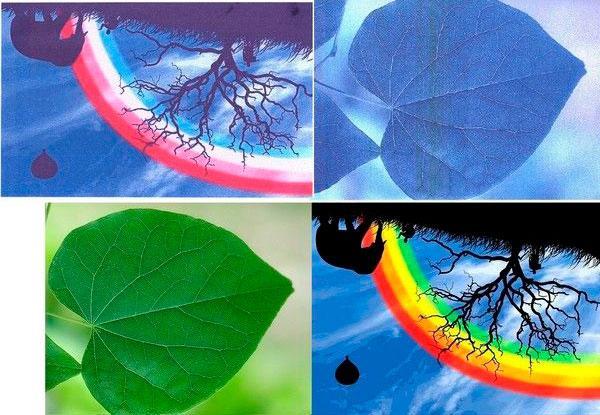 Пример спутанных принтером цветов